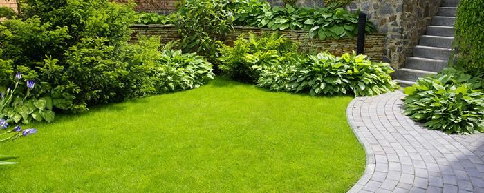 Clases de cesped free agrostis stolonifera se encuentra for Cesped para jardin